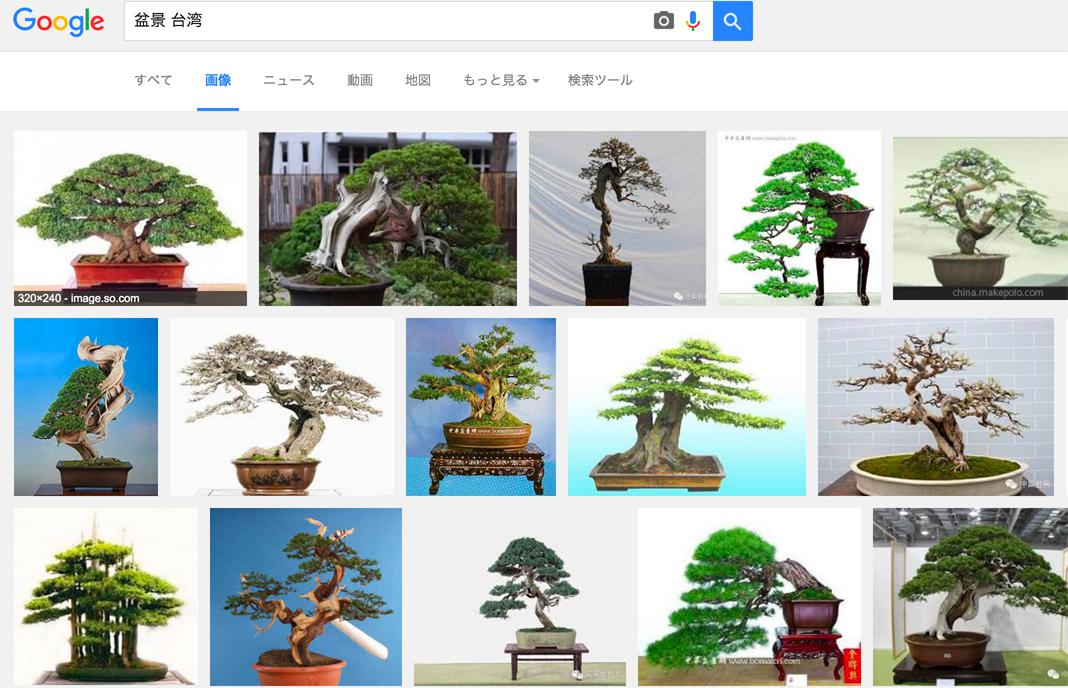 日本の松が大人気、盆景用に輸出されます。